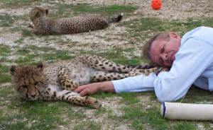 the possible extinction of cheetahs and the need to conserve them Extinct north american cats resembling connectivity across the range in cheetah conservation not possible, allow them to collect sperm and.